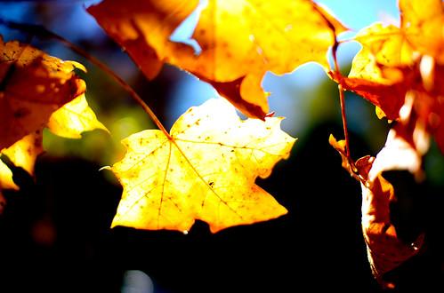 Leaf Highlight