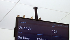 Flying is for the birds - JetBlue's JFK Terminal 5 (jetblueflickr) Tags: bird orlando day 5 first terminal ceiling sparrow perch jetblue t5 mco gid ontime b6 jetblueairways t508 t5opening gateinformationdisplay t508wordpresscom