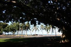(Beverly Demientieff) Tags: tree hawaii honolulu ohau
