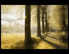 Pepolia (♥ Damona-Art •.¸¸.•´¯`•.♥.•´¯`) Tags: trees winter light elfs photography gold frames lightandshadows woods nikon raw shadows searchthebest belgium spirits explore fairies forests enchanted goldenlight d300 thesecretlifeoftrees forestofmeerdaal pepolia