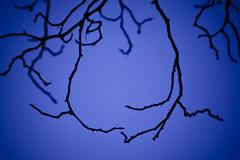 blue blue (friedling.) Tags: cold berlin rain germany deutschland drop rainy kalt tiergarten regen regnerisch tropfen zweige
