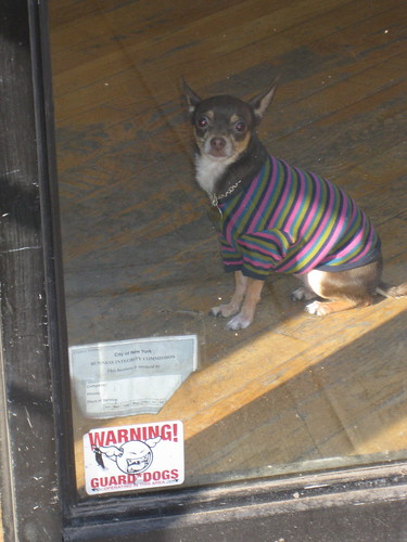 Warning! Guard Dogs