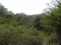 Umfolozi reserve