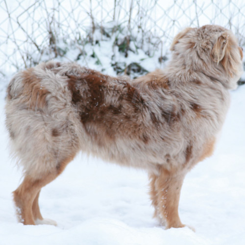 snow_sophie_herd