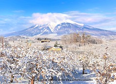 Iwaki Mountain (Volcano) (Hirosaki Japan).  Glenn Waters.  .  2,000 visits to this image.  Thank you. (Glenn Waters in Japan.) Tags: sky snow japan volcano aomori hirosaki    iwaki  appletrees       nikond700  glennwaters nikkor2470mmf28gedafs iwakimountain applefields 119may7th