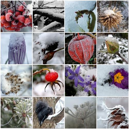 Winterspaziergang durch Mo`s Foto-Garten