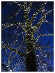 Christmas Tree, South Kensington (Martin Beek) Tags: christmas blue winter light colour hiver christmaslights winterlandscape theblues bluevision allthingsblue thecolourblue aworldofblue ©martinbeek2010