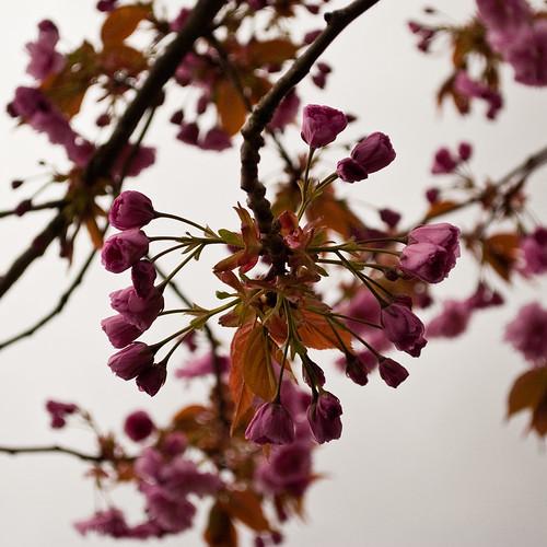 290410_ Blossom #5
