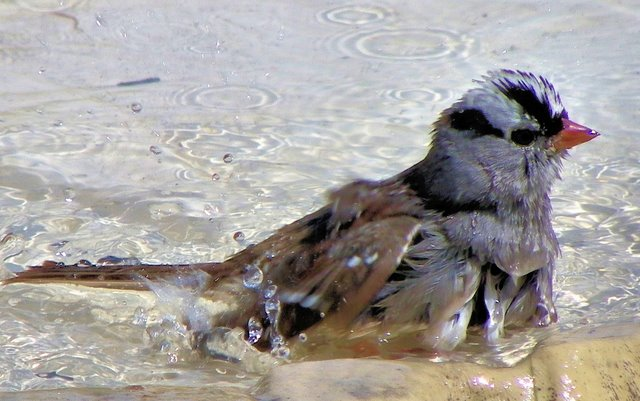 SPLISH SPLASH I WAS TAKING A BATH