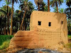 قديمك نديمك ~ (Abeer Hussein) Tags: