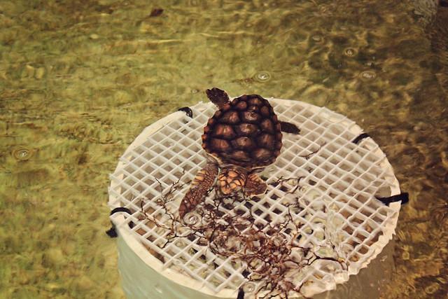 MODS turtle