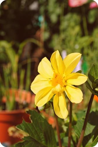 in the garden ::