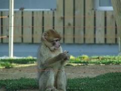 zoo vigo-010308 042
