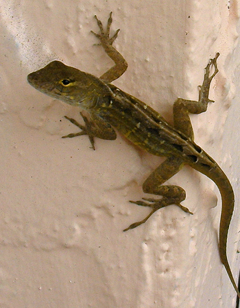 Gecko Cling