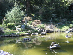 Turtles on a rock, with garden behind