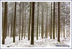 Lost in a forrest (Patrick Mollema) Tags: bomen bos kleurloos correze
