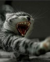 Фото 1 - Длительный сон поможет избавиться от лишних килограммов