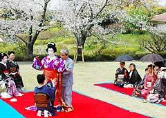 Elegance in Kagoshima