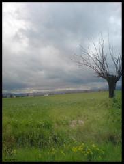 other face of spring (slow_brains) Tags: street sky cloud verde green primavera grass rain clouds spring strada nuvole nuvola country campagna erba cielo albero pioggia prato gelso