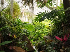 It's like a jungle sometimes... (nosha) Tags: newjersey nj conservatory greenhouse jungle tropical lush destroyed dorisduke ddcf indoorgardens savedukegardens 100placesusa dorisdukecharitablefoundation joanesperopresident nannerlokeohanechair johnjmackvicechair harrybdemopoulos anthonysfauci jamesfgill annehawley peteranadosy williamhschlesinger johnhtwilson johnezuccotti