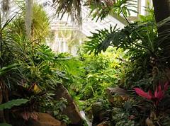 It's like a jungle sometimes... (nosha) Tags: newjersey nj conservatory greenhouse jungle tropical lush destroyed dorisduke ddcf indoorgardens savedukegardens 100placesusa dorisdukecharitablefoundation joanesperopresident nannerlokeohanechair johnjmackvicechair harrybdemopoulos anthonysfauci jamesfgill annehawley peteranadosy williamhschlesinger johnhtwilson johnezuccotti