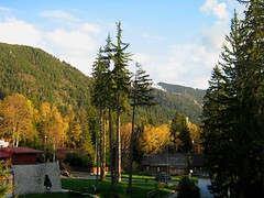 Poiana Brasov (cod_gabriel) Tags: wood las trees mountain mountains tree brad forest woodland woods resort bosque romania fir wald floresta fort hutan rumania romenia coniferous conifer romnia roumanie foresta munte montan romnia roemenie orman  copac  copaci poianabrasov conifere rumunsko romanya rumnien roemeni  brazi rumana arbore erd  padure florestas romnia rumanien sprucefir  rumunia paduri pdure  romnia arbori  montan poianabraov molid schulerau pduri rasinoase rinoase   rumunjska molizi staiune p