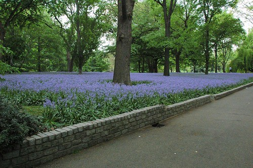 Bluebell Wood, Brooklyn Botanic Garden