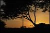 ... (Federica Mu ♪♫♪) Tags: sunset roma tramonto cieloromano giardinoromano