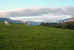 Lake District, UK (Adrian Cherciu) Tags: uk travel england sky panorama cloud holiday tourism lakedistrict sheepmountains touristcumbria landscuk landscapeuk