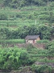 China-1096