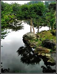 Shinjuku Gyoen Garden (alvinkredible) Tags: park trees lake tree water japan reflections garden landscape nikon rocks shinjuku gyoen alvin ac3 tonemapping vr18200 capturenx aplusphoto alvinkredible