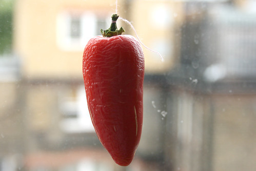 Chilli on a string