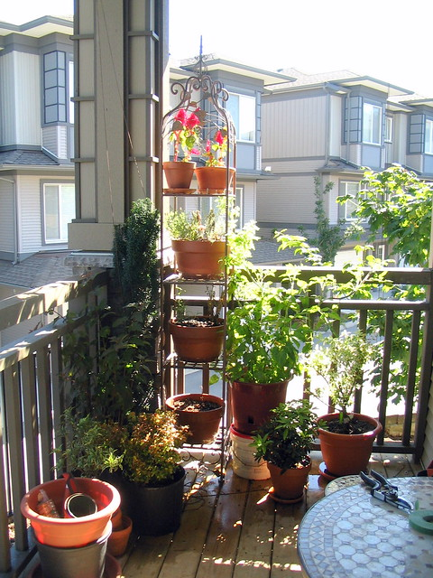 Our small balcony garden.jpg