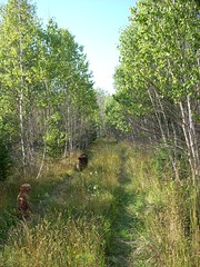 Let's go for a walk 17 (margaret.metzler) Tags: road summer pets dogs nature animals forest path maine ber