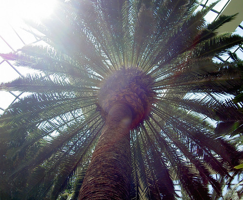 Palm Tree Symbolism Symbolic Meanings Blog By Avia Venefica