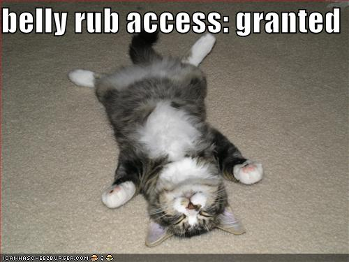 belly rub - access granted