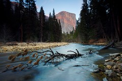 El Capitan and Fallen Tree (Nick Carver Photography) Tags: california park wood travel blue trees winter sunset orange cliff usa mountain mountains tree tourism nature yellow rock pine river relax landscape outdoors gold landscapes log rocks turquoise calm cliffs alpine valley fallen rivers serenity western granite serene yosemitenationalpark wilderness elcapitan sierranevada relaxed desolate yosemitevalley centralcalifornia mercedriver wildlifereserve natureparks ncpfineartprint nationalparksystem