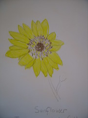Sunflowers 008