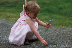Young girl playing with flowers (melissabain) Tags: pink flowers playing girl pretty sweet innocent young fairy counting fairycostume innocentmoment younggirlpickingflowers