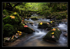Welzheim Autumn (Ralph Oechsle) Tags: autumn water leaves creek forest welzheim longexposurewater