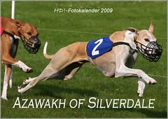 Azawakh_Kalender 2009