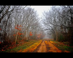 The Dead of Winter (lee.mccain.photorama) Tags: art fog landscape alabama explore allrightsreserved iphotooriginal naturesfinest wheelerwildliferefuge fogandrain napg fogography leemccain nikond300 aperture20 nophotocanbeusedwithoutmywrittenpermission