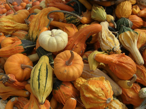 Gourds a plenty