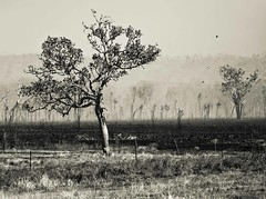 Outback NT (C) 2008