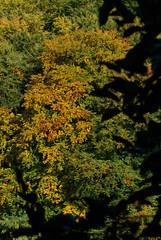 I colori dell'autunno (babau81) Tags: wood autumn red italy colour tree verde green nature yellow foglie contrast gold lights italia colours natura ombre giallo luci albero autunno rosso colori nero oro bosco contrasto sfumature trentinoaltoadige vigoditon