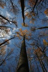 IMG_1160 (Lisa GH) Tags: autumn fall nature newjersey nj mercercounty naturecenter plainsboro plainsboronaturecenterplainsboro newjerseynewjerseymercercountynaturefallautumn