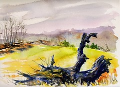 Uprooted Giant (Artist Naturalist-Mike Sherman) Tags: autumn watercolor painting latefall enpleinair midmichigan