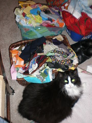 Stinky in front of the scraps (craftyturtle1) Tags: scraps stinky