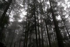 Bosque (chαblet) Tags: méxico bn bosque hidalgo elchico α100 chablet
