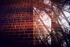 No way out () Tags: plants brick film leaves wall bristol lomo xpro crossprocessed supersampler kodak doubleexposure double ishootfilm oxford elitechrome botanicgarden vivitar glasshouse 400iso ultrawideslim elitechrome400 withkatemellersh